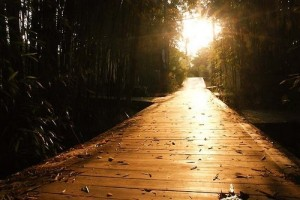 light,,,path,light,sunset,lighting,nature-41f773f8f24c6fffefc6516030b7503b_h
