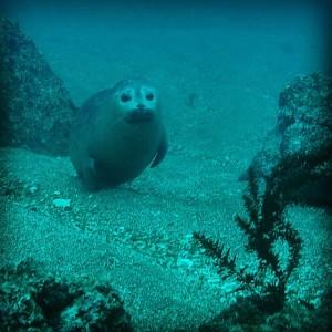 Ryan Baby Seal