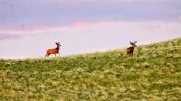 Deer in WY